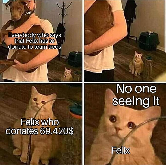 Cat - Everybody who says that Felix has to donate to team trees No one seeing it Felix who donates 69.420$ Felix