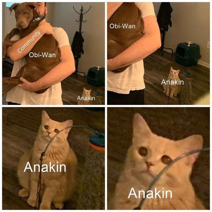 Cat - Community Obi-Wan Obi-Wan Anakin Anakin Anakin Anakin