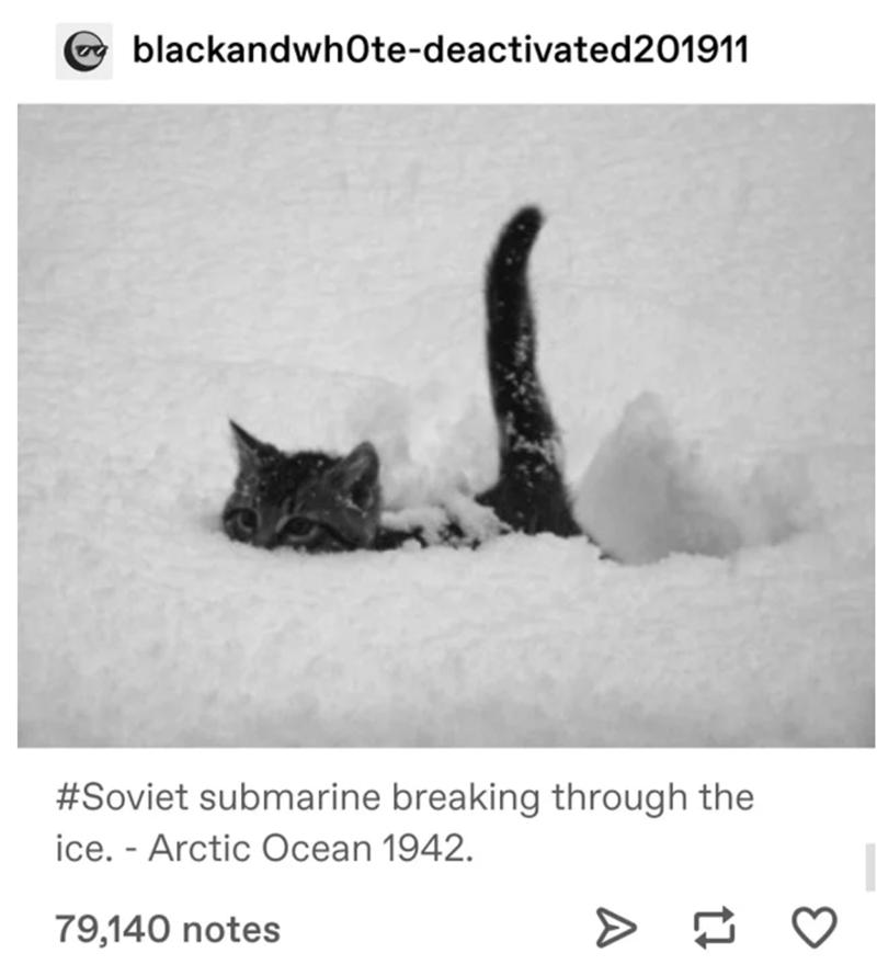 Cat - blackandwhOte-deactivated201911 #Soviet submarine breaking through the ice. - Arctic Ocean 1942. 79,140 notes
