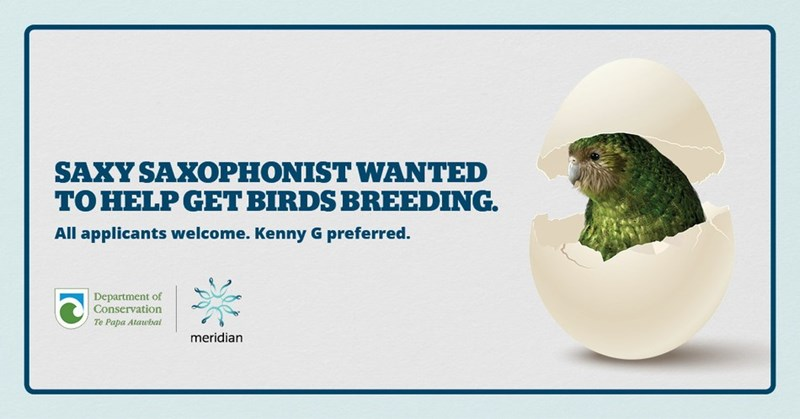 Groundhog - SAXY SAXOPHONIST WANTED TO HELP GET BIRDS BREEDING. All applicants welcome. Kenny G preferred. Department of Conservation Te Papa Atawbat meridian