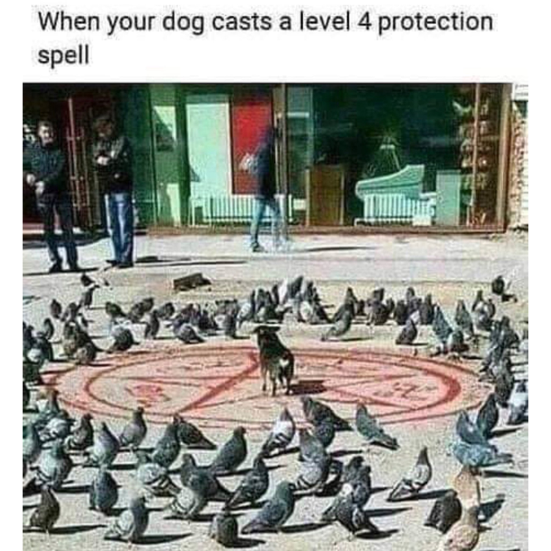 Text - When your dog casts a level 4 protection spell