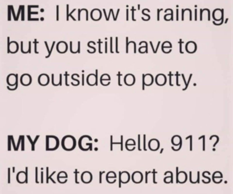 Text - ME: I know it's raining, | but you still have to go outside to potty. MY DOG: Hello, 911? l'd like to report abuse.