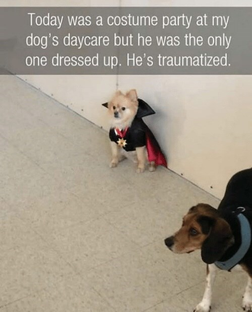 Dog - Today was a costume party at my dog's daycare but he was the only one dressed up. He's traumatized.