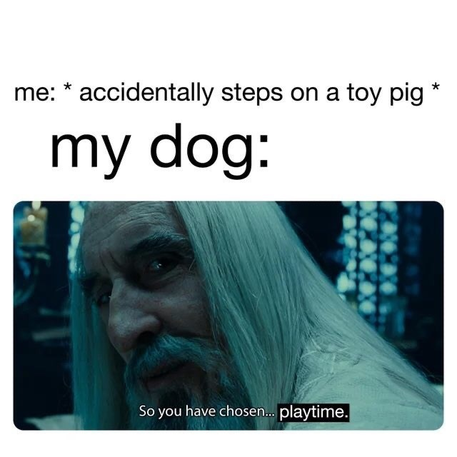 Text - me: * accidentally steps on a toy pig my dog: So you have chosen. playtime.