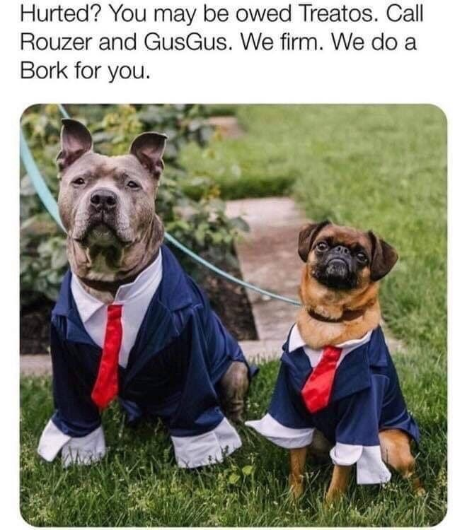 Dog - Hurted? You may be owed Treatos. Call Rouzer and GusGus. We firm. We do a Bork for you.