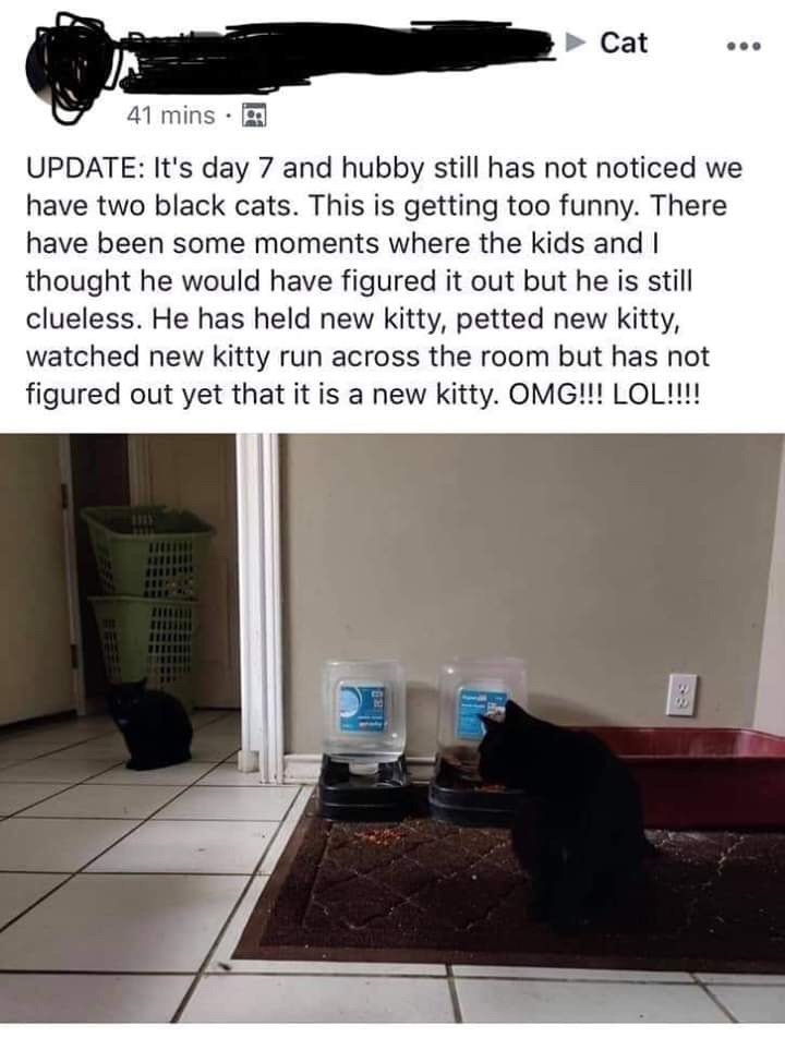 Text - Cat 41 mins · P UPDATE: It's day 7 and hubby still has not noticed we have two black cats. This is getting too funny. There have been some moments where the kids and I thought he would have figured it out but he is still clueless. He has held new kitty, petted new kitty, watched new kitty run across the room but has not figured out yet that it is a new kitty. OMG!!! LOL!!!!