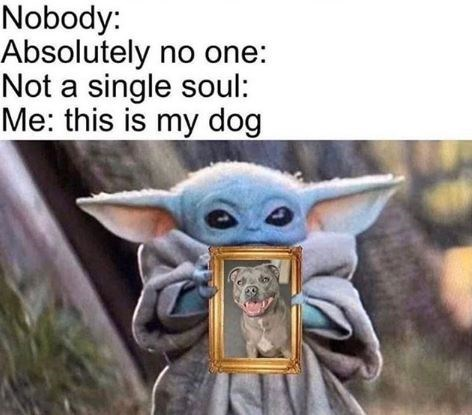 Yoda - Nobody: Absolutely no one: Not a single soul: Me: this is my dog