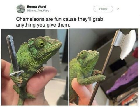 Reptile - Emma Ward OEmma The Ward Follow Chameleons are fun cause they'll grab anything you give them. IND