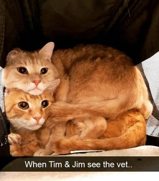 Cat - When Tim & Jim see the vet...