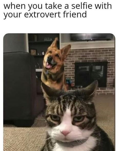 Cat - when you take a selfie with your extrovert friend