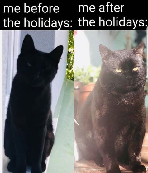 Cat - me before me after the holidays: the holidays: