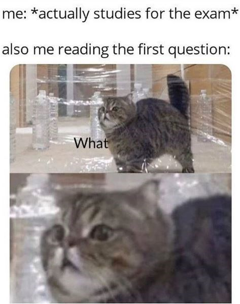 Cat - me: *actually studies for the exam* also me reading the first question: What