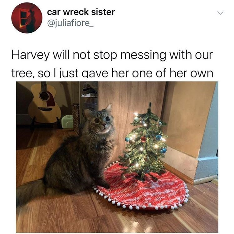 Cat - car wreck sister @juliafiore_ Harvey will not stop messing with our tree, so l just gave her one of her own