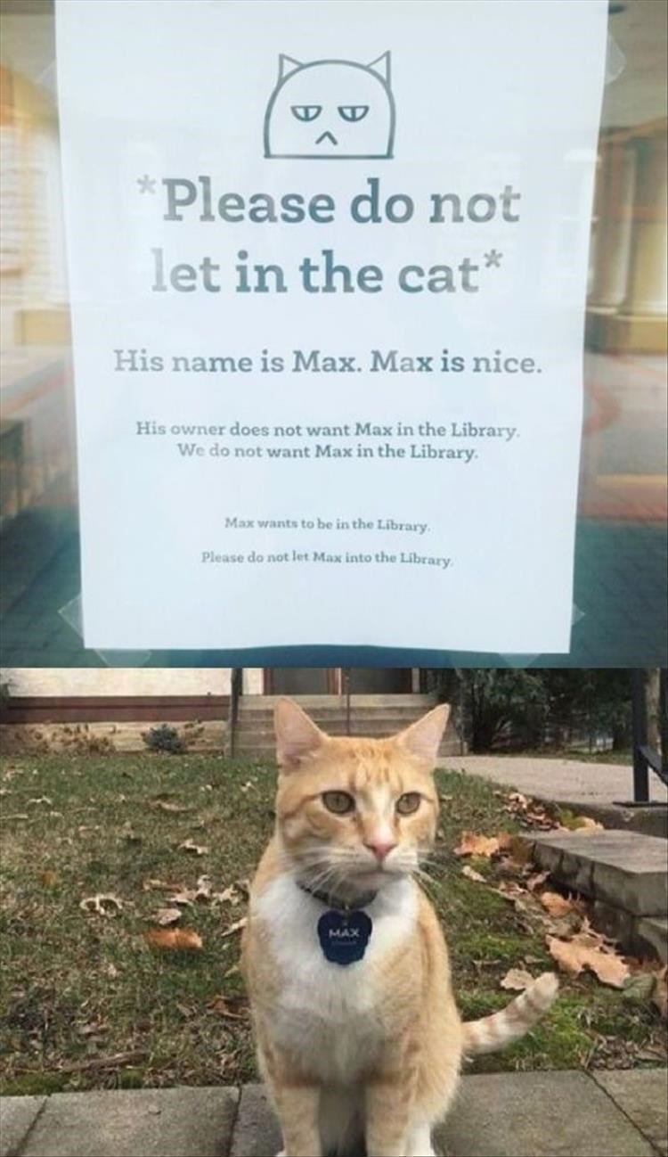 Cat - *Please do not let in the cat* His name is Max. Max is nice. His owner does not want Max in the Library. We do not want Max in the Library. Max wants to be in the Library. Please do not let Max into the Library. MAX