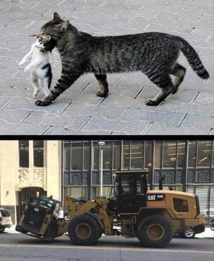 Cat - CAT CAT