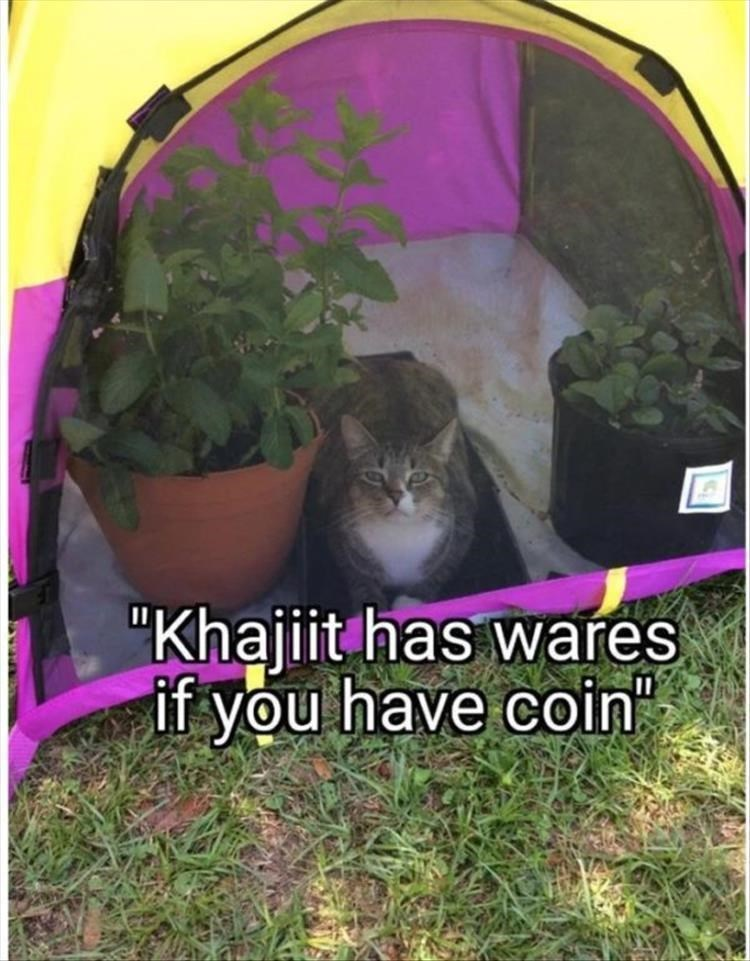 "Cat - ""Khajiit has wares if you have coin"""