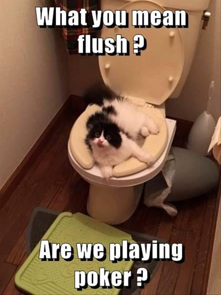 Photo caption - What you mean flush ? Are we playing poker ?