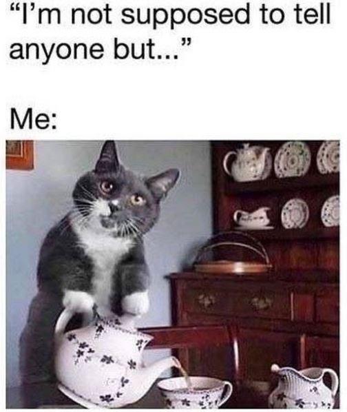 cat Memes Cats funny cat memes - 9410205184