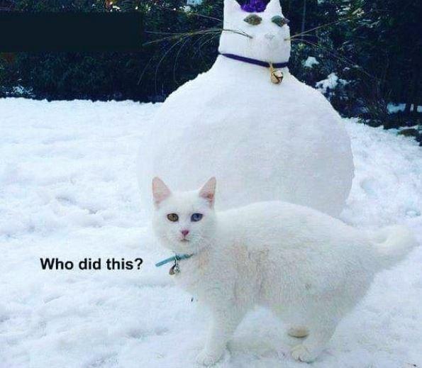 Cats funny cat memes - 9410205696
