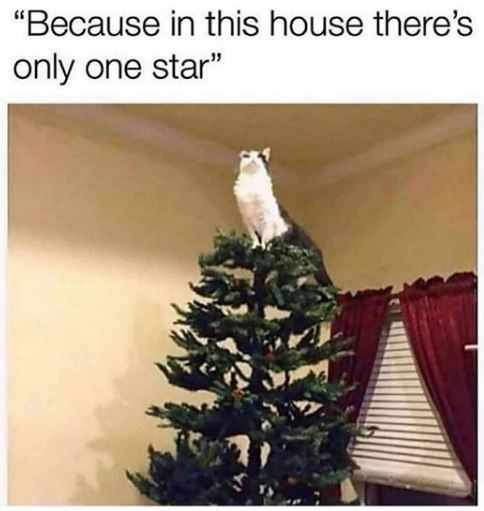 cat sitting proudly on top of a christmas tree where normally a tree topper would go and caption that reads, because in this house there's only one star