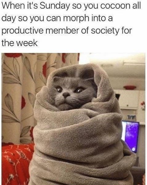 grey cat wrapped up in a soft blanket like a burrito with only its face visible and caption that reads, when it's sunday so you cocoon all day so you can morph into a productive member of society for the week