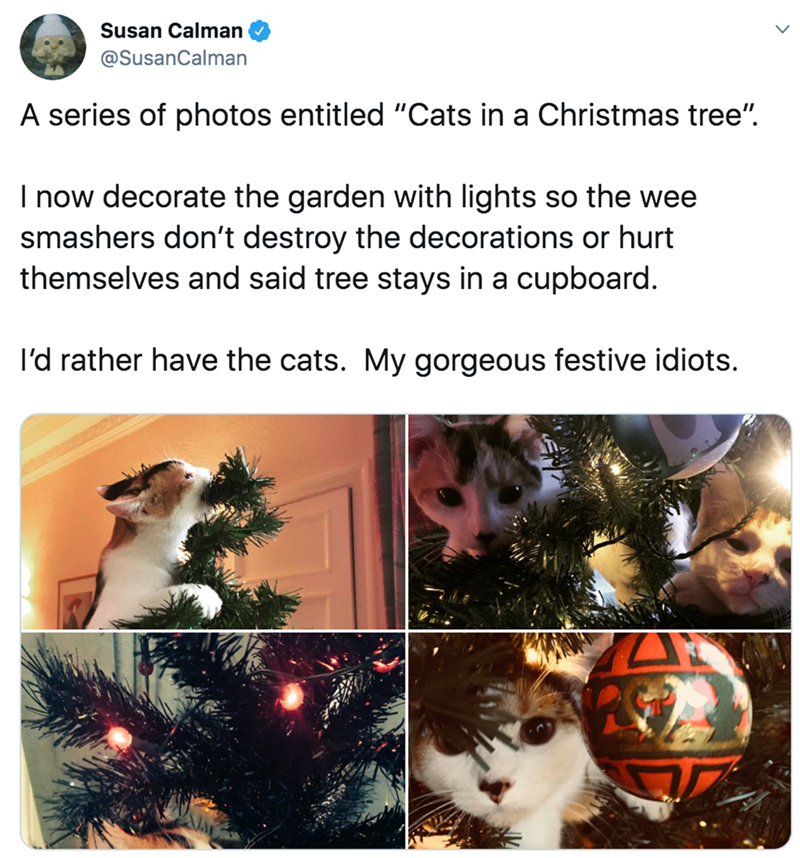 """Tree - Susan Calman @SusanCalman A series of photos entitled """"Cats in a Christmas tree"""". I now decorate the garden with lights so the wee smashers don't destroy the decorations or hurt themselves and said tree stays in a cupboard. l'd rather have the cats. My gorgeous festive idiots."""