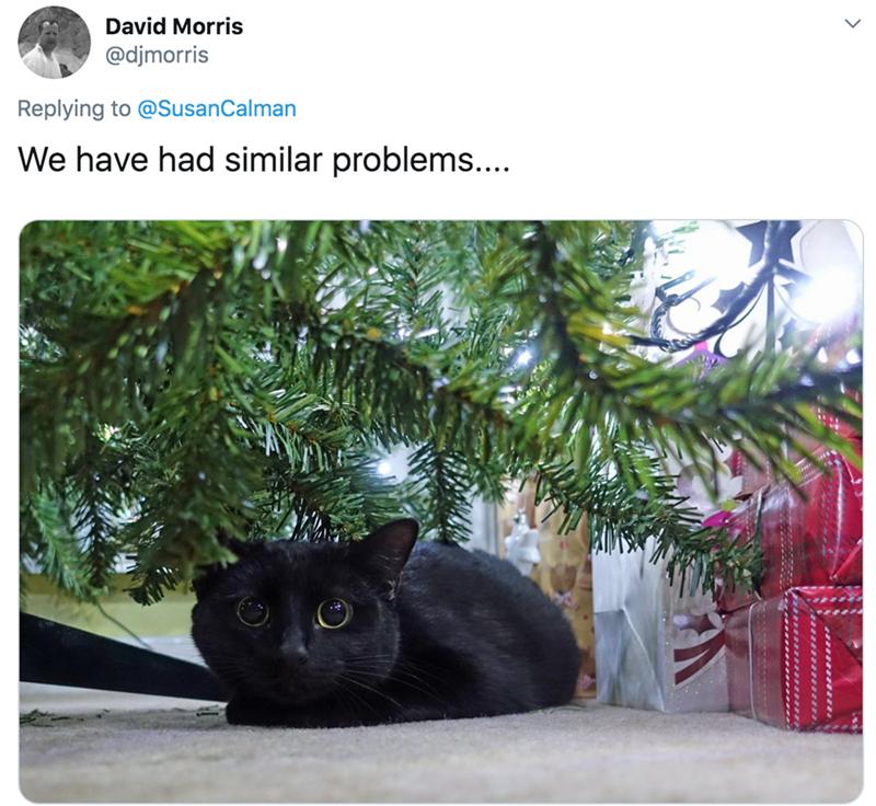 Cat - David Morris @djmorris Replying to @SusanCalman We have had similar problems....