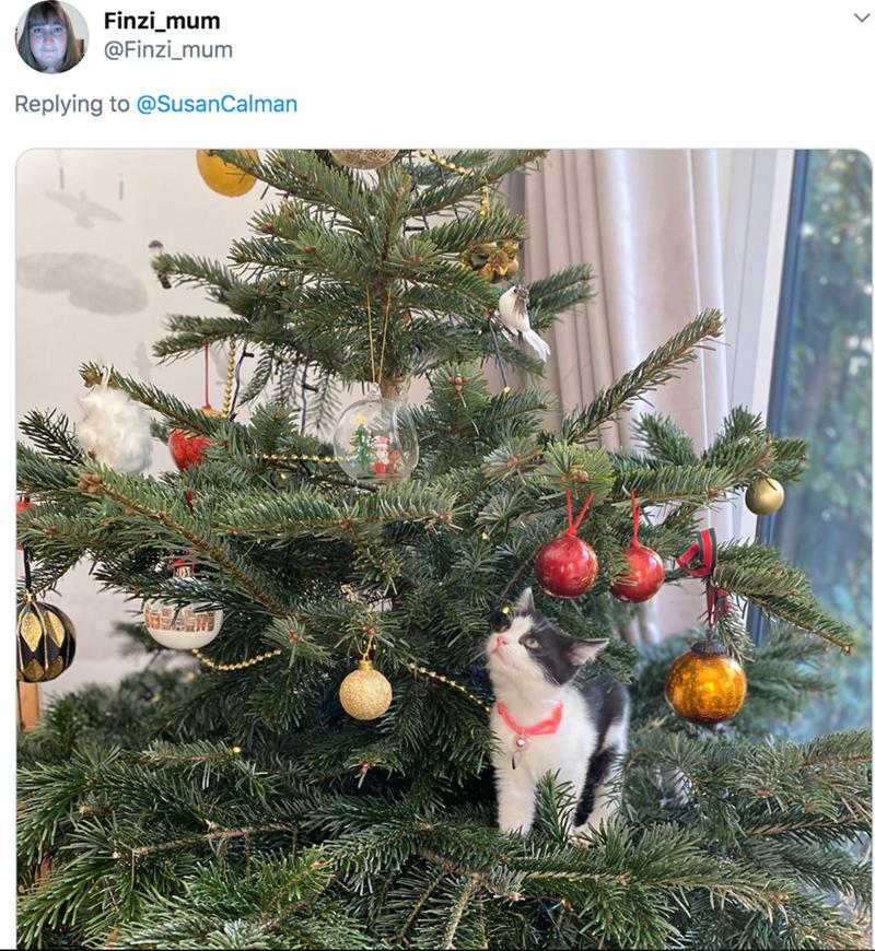 Christmas tree - Finzi_mum @Finzi_mum Replying to @SusanCalman