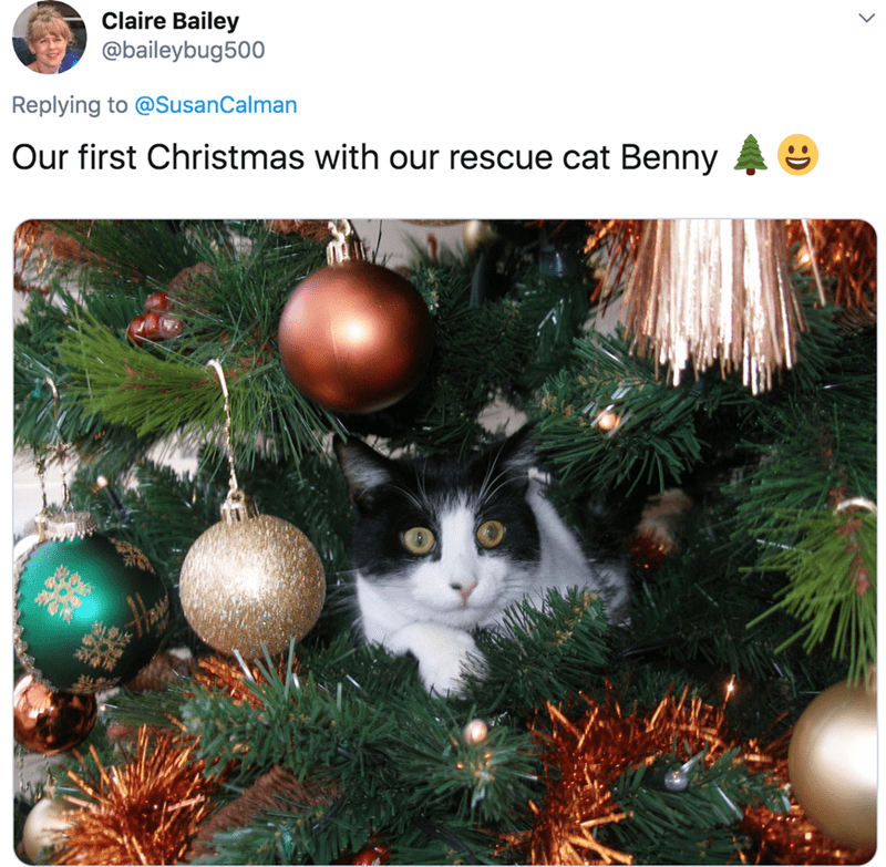 Christmas tree - Claire Bailey @baileybug500 Replying to @SusanCalman Our first Christmas with our rescue cat Benny