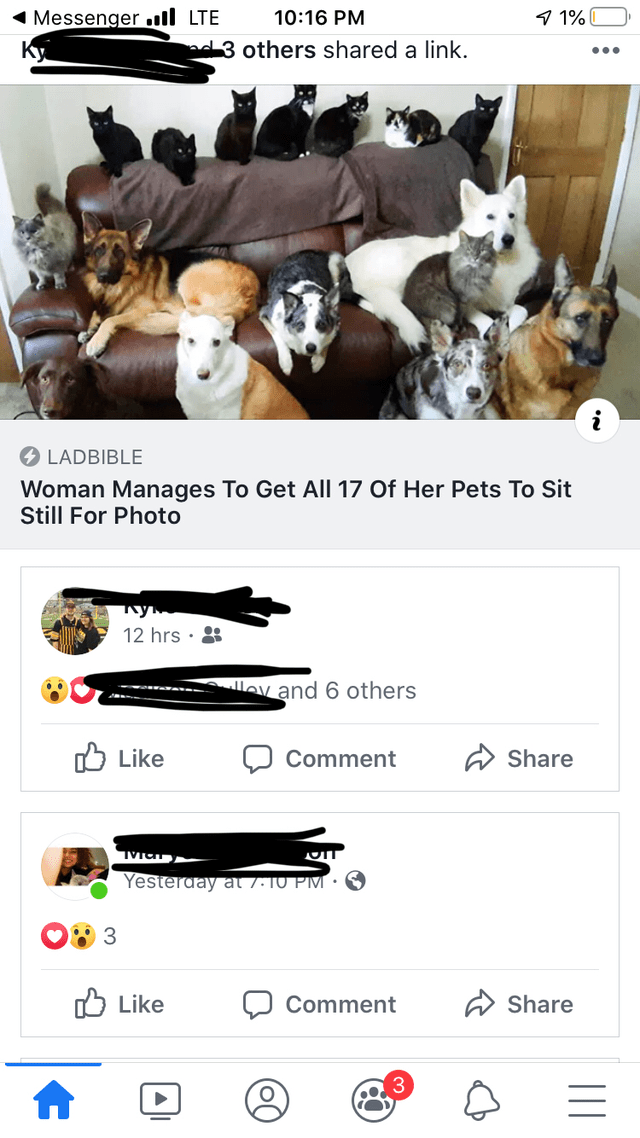 Font - 9 1% 1 Messenger ull LTE 10:16 PM nd3 others shared a link. •.. LADBIBLE Woman Manages To Get All 17 Of Her Pets To Sit Still For Photo 12 hrs · 8 ---------- ev and 6 others O Like Share Comment Yesterday at 7.10 PM • O Like A Share Comment