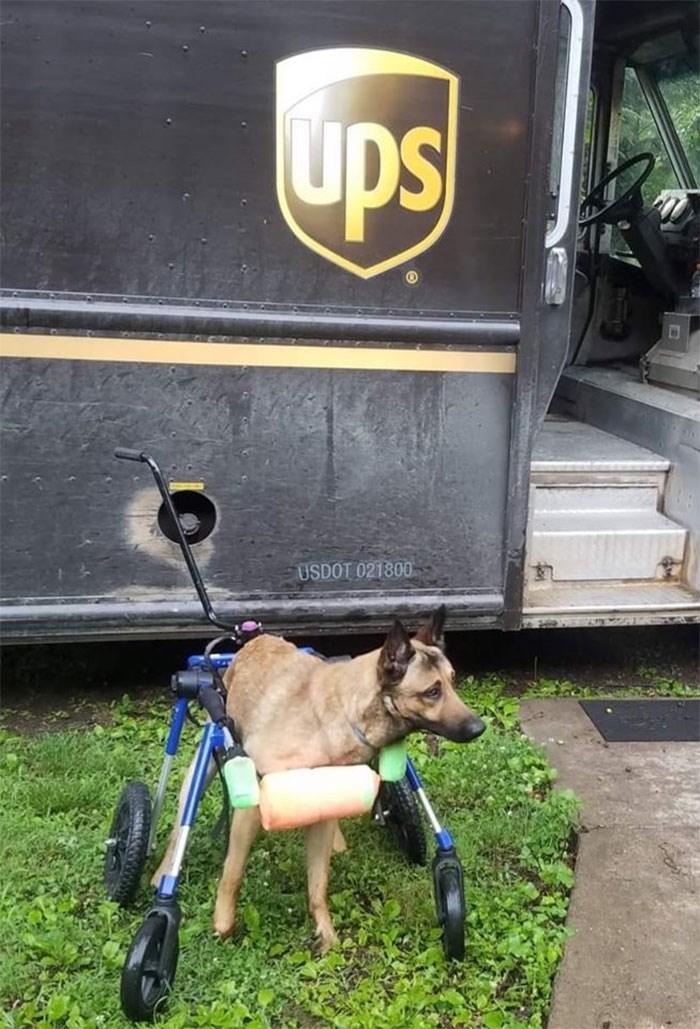 Vehicle - ups USDOT 021800