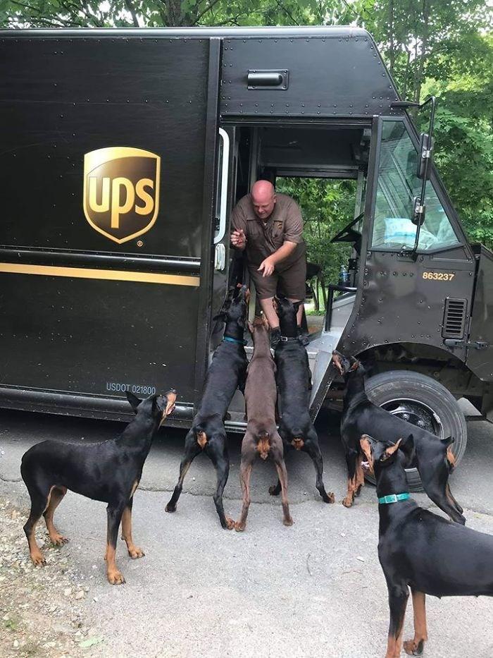 Dog - ups 863237 USDOT 021800