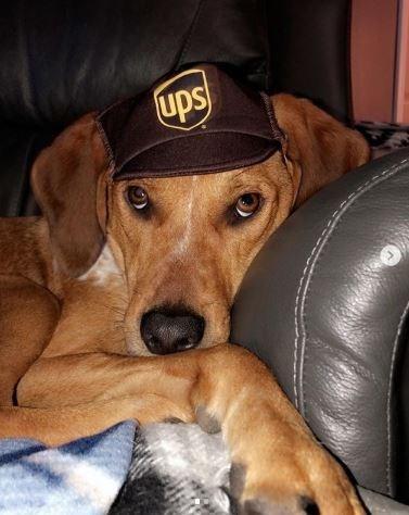 Dog - ups