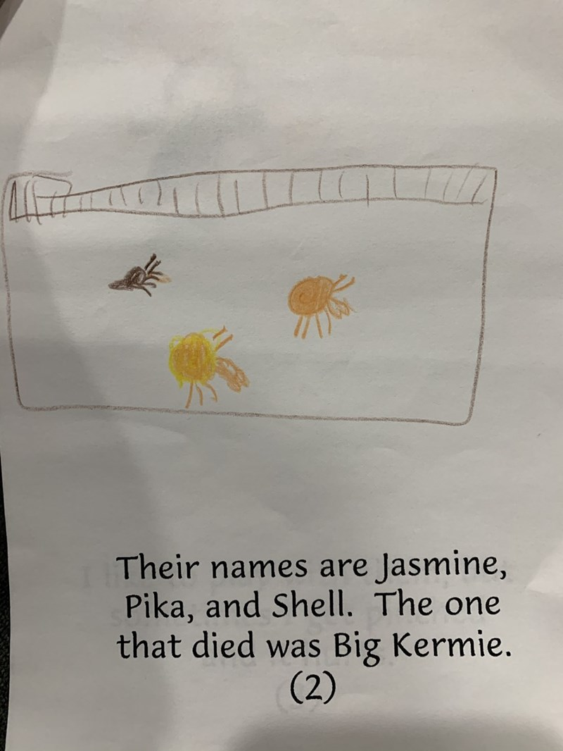 Text - Their names are Jasmine, Pika, and Shell. The one that died was (2) Big Kermie.