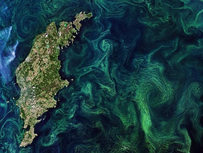 Green algae blooms in the baltic sea seen from space next to an island