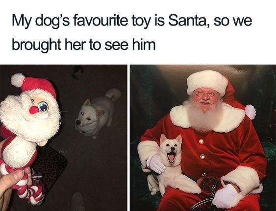 Santa claus - My dog's favourite toy is Santa, so we brought her to see him