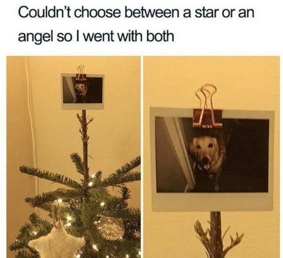 Organism - Couldn't choose between a star or an angel so I went with both