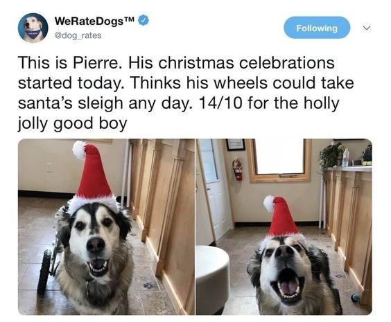 Mammal - WeRateDogsTM Following @dog_rates This is Pierre. His christmas celebrations started today. Thinks his wheels could take santa's sleigh any day. 14/10 for the holly jolly good boy