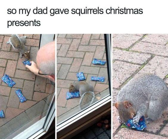 Adaptation - so my dad gave squirrels christmas presents