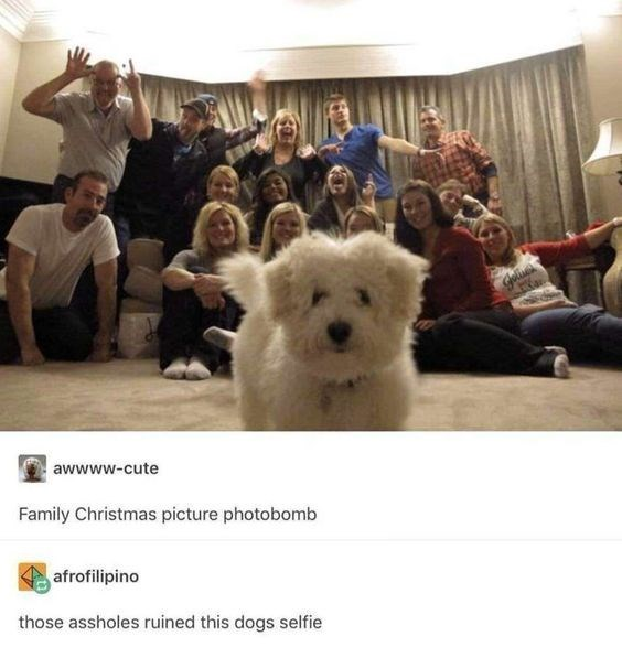 Dog - awwww-cute Family Christmas picture photobomb afrofilipino those assholes ruined this dogs selfie