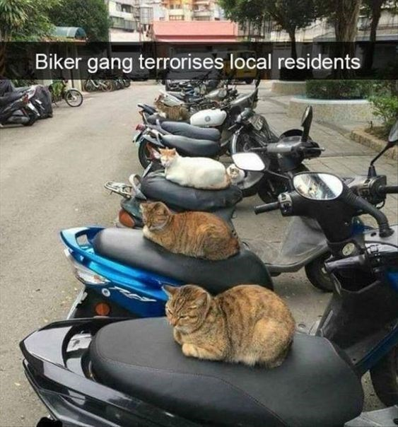 Motor vehicle - Biker gang terrorises local residents