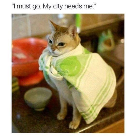 "Cat - ""I must go. My city needs me."""
