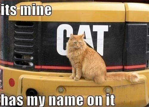 Cat - its mine CAT has my name on it