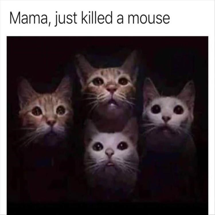 Cat - Mama, just killed a mouse