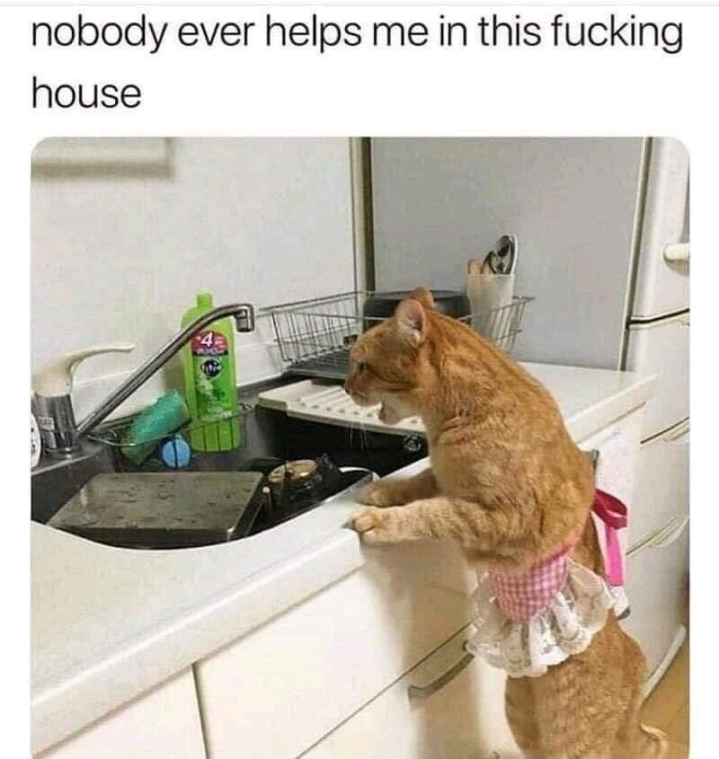 Cat - nobody ever helps me in this fucking house