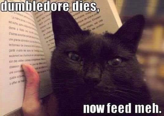 Cat - dumbledore dies, ১ une grande ctorer obseson ne con uste oct afe de now feed meh.