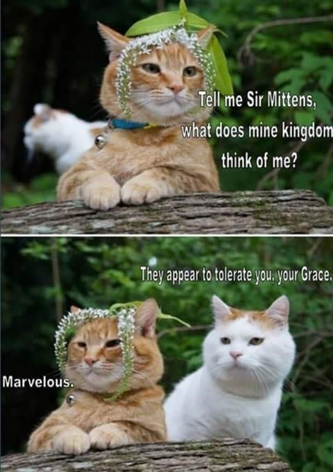 Cat - Tell me Sir Mittens, what does mine kingdom think of me? They appear to tolerate you, your Grace. Marvelous.