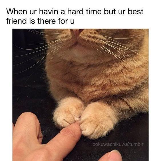 Cat - When ur havin a hard time but ur best friend is there for u bokuwachikuwa tumblr