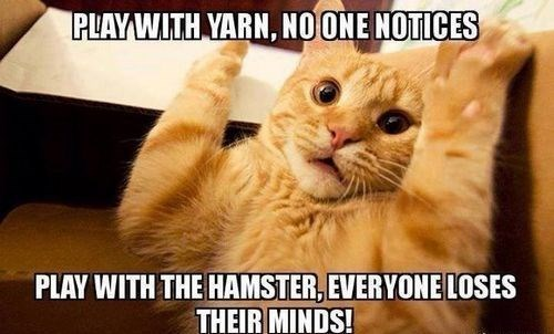 Cat - PLAY WITH YARN, NO ONE NOTICES PLAY WITH THE HAMSTER, EVERYONE LOSES THEIR MINDS!