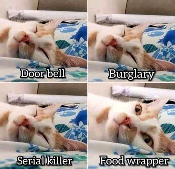 Cat - Burglary Door bell Food wrapper Serial killer